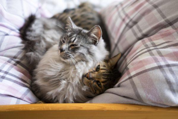 リモートワークで在宅時間が増えた結果、ペットに悲劇が起きている事実